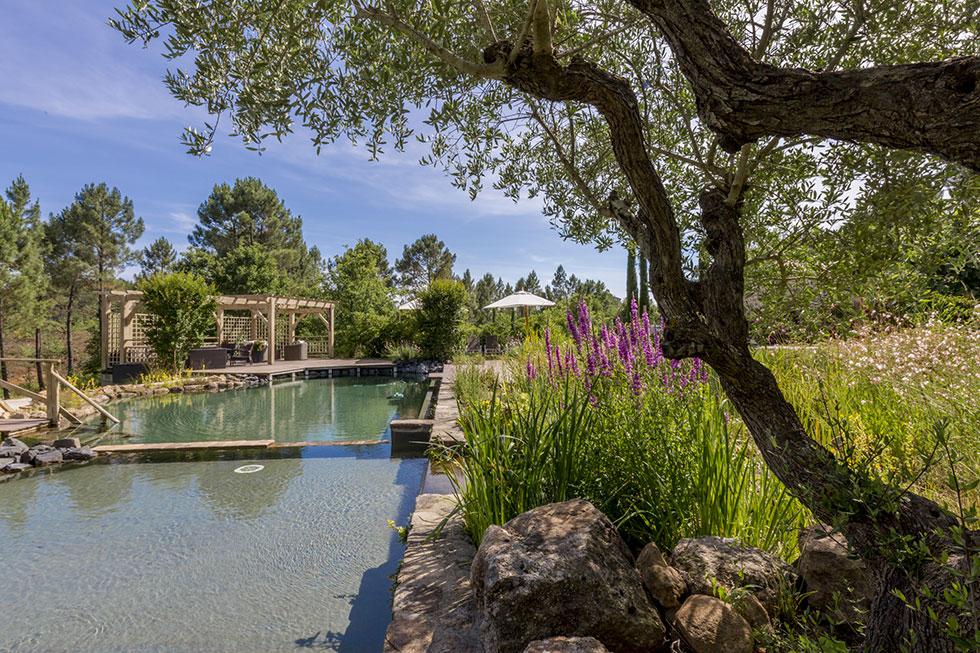 Piscine naturelle hôtel Mas de Baume